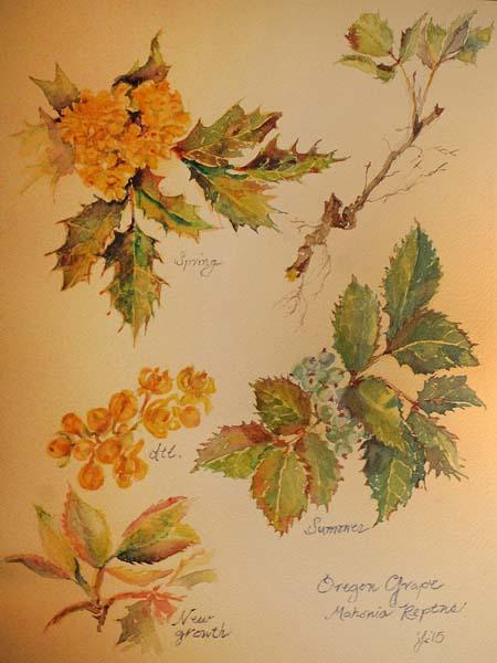 "Honorable Mention ""Oregon Grape - Mahonia Repens"" watercolor by Jean Krueger"