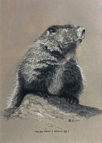 A charcoal drawing of a yellow bellied marmot in a sophisticated pose, nose in the air.