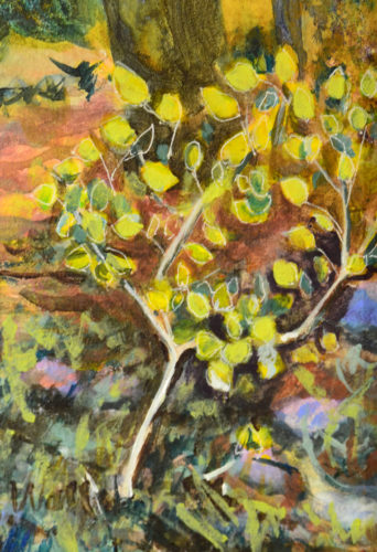 Close up scene of a small aspen tree in yellow foilage